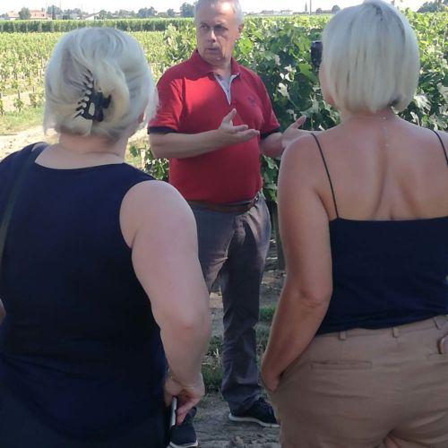 french prestigious vineyard