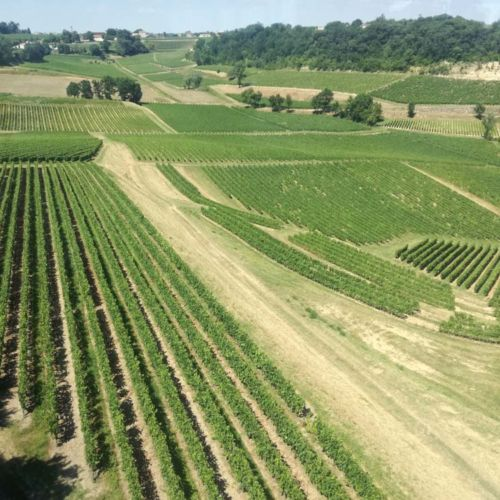 vineyard of Saint Emilion