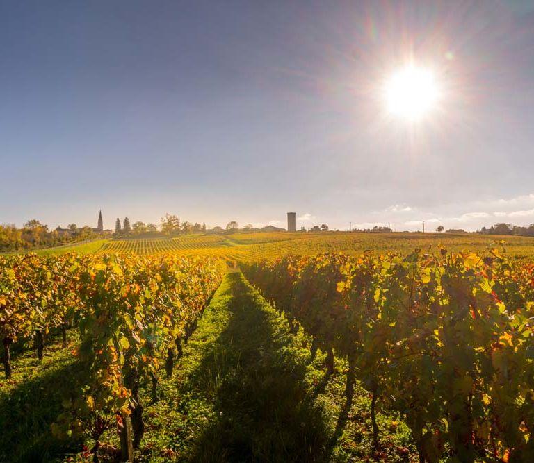 vineyard visits wine tasting